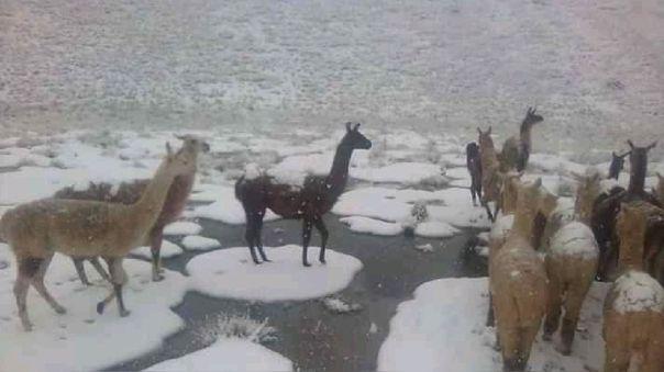 Temporada de heladas en Cusco