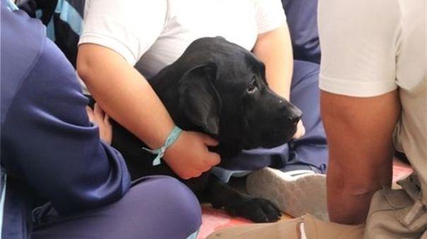 El estudio preliminar refleja, además, que un solo perro puede examinar hasta 250 personas en una hora.