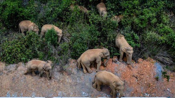 Elefantes en China.
