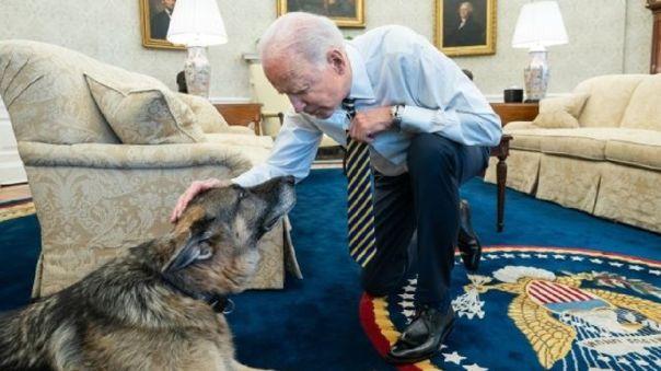 Champ, uno de los perros del presidente Joe Biden