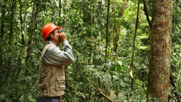 Osinfor fortalece procesos de supervisión para impulsar la competitividad del sector forestal