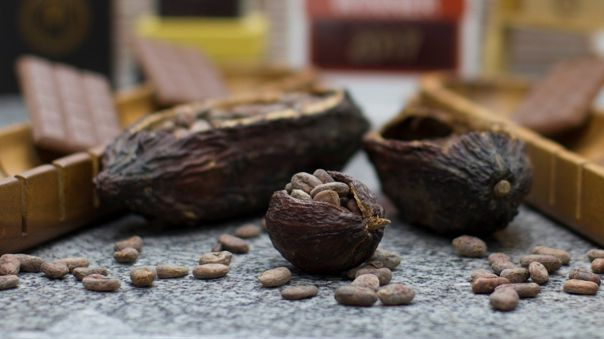 Según la Organización Internacional del Cacao (ICCO), el 75 % de las exportaciones peruanas es cacao fino y de aroma.