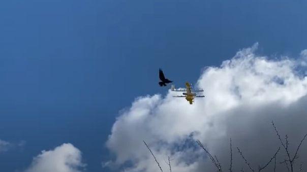 Dron es atacado por cuervo