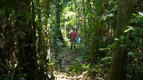 El narcotráfico vuelve a atentar contra los indígenas cacataibo de Perú