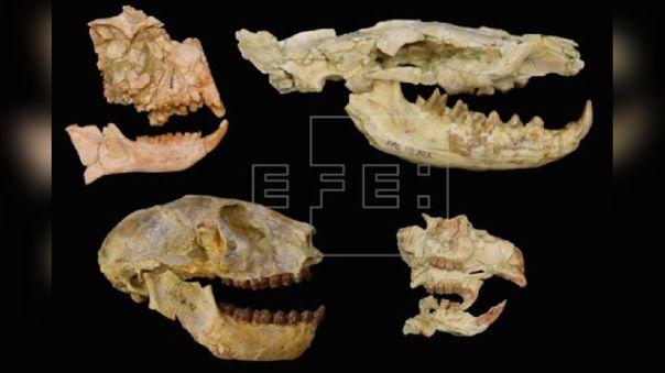 Extinción masiva hace 30 millones de años
