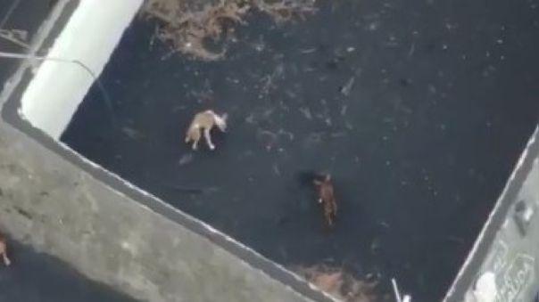 Perros en La Palma