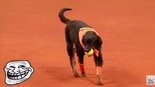 YouTube: perros hacen de recogebolas en el Abierto de Brasil