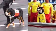 'Lorenzo', 'Colitas' y las mascotas que se robaron el show en la Parada Militar