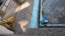 Lima: peces viven en piscina contaminada del Parque de la Exposición