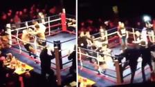 Aficionados provocaron una batalla campal en plena lucha de MMA