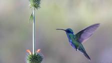 Fotos   Perú, un paraíso de aves