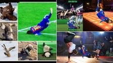 Messi es víctima de los memes por su violenta caída ante Juventus