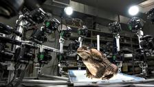 Proyecto de Ranas en 3D ayuda a la conservación de especies amenazadas