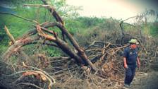 Invasión de terrenos deforesta mil hectáreas del Área de Conservación Privada Chaparrí