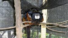 ¿Monos mellizos? Sí y estas son sus primeras fotografías