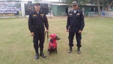 Perro peruano brindará seguridad por Fiestas Patrias en Chiclayo