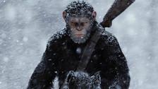 Crítica   'El Planeta de los Simios: La Guerra', vivir en peligro de extinción