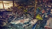 Ecuador interceptó un barco chino que llevaba cientos de tiburones muertos