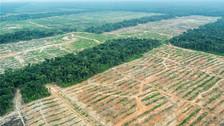 Reportaje | Perú ha perdido 15,000 hectáreas de bosques en lo que va de 2017