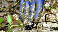 Operaciones petroleras vertieron toneladas de metales pesados a ríos de la Amazonía en Perú, según estudio
