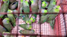Se disparan las cifras del tráfico de animales silvestres en el Perú