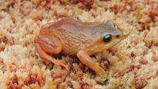 Cinco asombrosas especies descubiertas este año en Latinoamérica