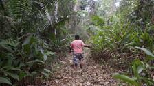 ¿Cómo detener la deforestación en la Amazonía? El caucho podría ser la respuesta