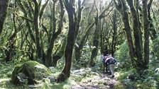 ¿Qué amenaza a los bosques del Santuario Nacional de Ampay?