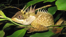 Gran Mekong: tres sorprendentes especies descubiertas en hotspot asiático