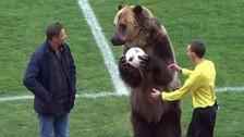Previo al Mundial: oso en Rusia dio play de honor a un partido