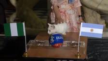 El gato Aquiles dio como ganador a Nigeria frente a Argentina
