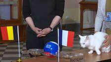 Francia vs. Bélgica: el gato Aquiles reveló al primer finalista del Mundial