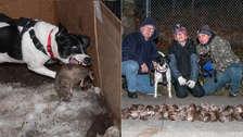 5 fotos que muestran cómo actúan los perros cazadores de ratas en Nueva York