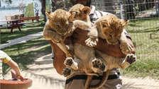 Leones golpeados y monos que comen sus propios excrementos: la cruel realidad del zoo de Gaza