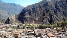 "Confirman hallazgo de ""Ollanta"" árbol de data inca que se creía extinto"