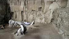 Arqueólogos hallan restos de 14 mamuts que vivieron hace más de 14,000 años en México [FOTOS]
