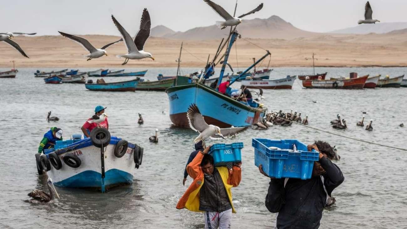 En el Perú se debe invertir en el desarrollo de investigación científica y académica, de manera que se pueda aprovechar la riqueza del mar peruano de forma sostenible.